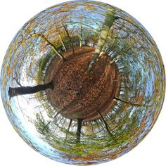 Forest as a globe