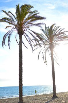 Palms Trees Marbella Spain