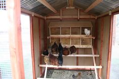 inside chicken coop pics   Click on right side of picture to see NEXT or left side to see ...