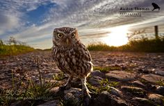 Welcome to my wide angle world... by Austin_Thomas #animals #pets #fadighanemmd