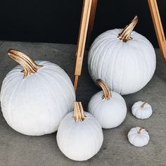 Pinned from @lavender_thyme on IG - white and gold pumpkins at the Rifle Paper Co. store in Florida