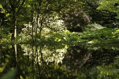 Reflections in a woodland setting | in a garden designed by Louis Benech, Paris