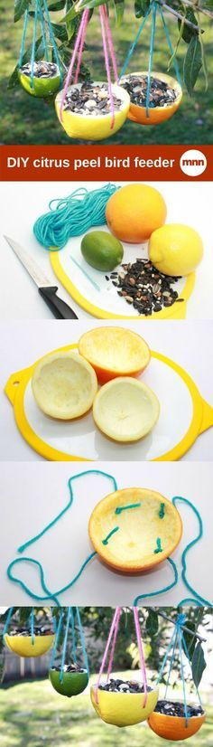 After you've eaten an orange, keep the peel and recycle it into a cute DIY bird seed feeder.
