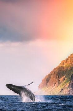 Humpback Whale - Mark Gvazdinskas