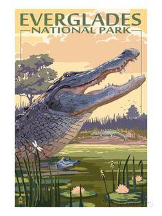 The Everglades National Park, Florida - Alligator Scene Prints by Lantern Press at AllPosters.com