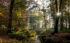 """Happy New Year! - Happy New Year!  I wish you all a Bright & Shiny New Year :)  Autumn Rays at the meandering brook 'Oostrumse Beek' on a misty sunny autumn morning in the forest of estate 'Landgoed Geijsteren', Geijsteren, Netherlands.  If you like my work you can also follow me at <b><a href=""""https://www.facebook.com/williammevissenphotography"""">facebook</a></b>, <b><a href=""""https://instagram.com/williammevissen/"""">instagram</a></b>, <b><a…"""