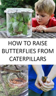 Raising butterflies from caterpillars is a wonderful science project for kids to teach them about metamorphosis, natural habitats and caring for wildlife. Garden Junk, Wooden Garden, Easy Garden, Garden Art, Butterfly Hatching, Diy Butterfly, Butterfly Project, Butterfly Feeder, Monarch Butterfly
