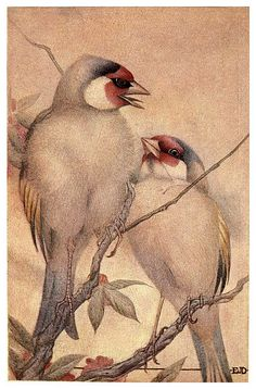 El jilguero cautivo-Birds and beasts 1911- Edward Detmold