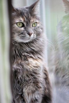 Green-eyed lady por lstarner (Lynn)    Via Flickr: Chloe in the window.