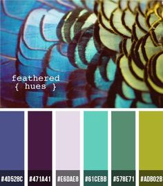Peacock feather inspired color scheme with included RGB hex codes! #colorscheme #design