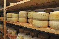 Storing and Aging Homemade Cheese  http://www.culturesforhealth.com/storing-aging-homemade-cheese