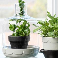 Glass Kitchen Greenhouse Dome, Sage by Sagaform | Raw Rutes   #Sagaform #rawrutes #Greenhouse #herbs
