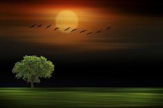 SUNSET+-+SUNSET+WITH+A+LONER+TREE