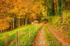 Fine Art Prints Autumn path to abandoned hut Photographe Lausanne