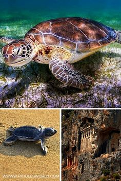 Turtle Beach _Dalyan Turkey_PKJW - One of the must see places in Marmaris!
