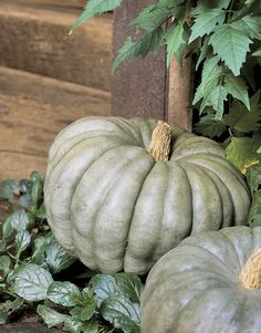 Big Green Pumpkins