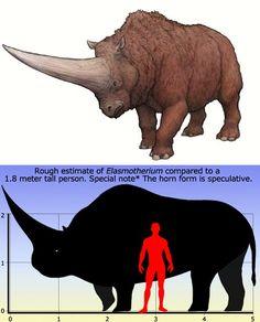 Elasmotherium http://en.wikipedia.org/wiki/Elasmotherium