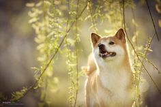 Dogsimle*** by Anne Geier on 500px