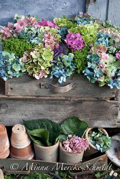 Blomsterverkstad: Hortensia och skriva bok