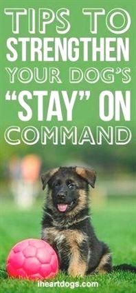 Free Hacks And Guide For Dog Training For Obedience A Number Of