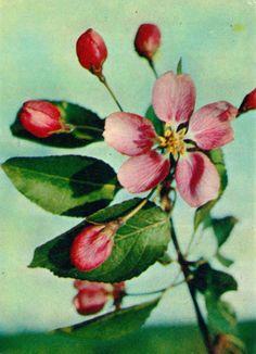 Soviet Postcards | Posts tagged flowers