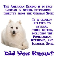 American Eskimo Dogs were renamed because of high anti-German sentiment arising from WWI.