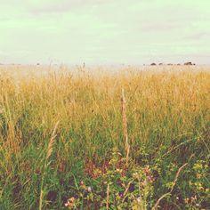 Dernière photo de l'île :(