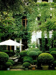 a boxwood garden, different shapes, sizes, stone patio
