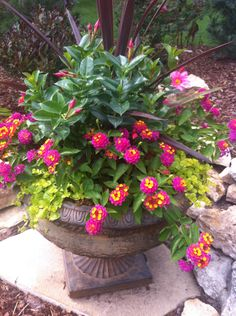 Mandevilla and lantana are the stars in this container urn