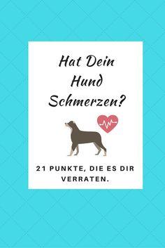 21 Punkte, die Dir verraten, ob Dein Hund Schmerzen hat.