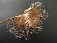Evil skeleton leaf by Rawgash on DeviantArt Natural Structures, Natural Forms, Decay Art, Leaf Skeleton, Growth And Decay, Leaf Texture, Dry Leaf, Nature Plants, Patterns In Nature