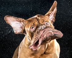 """Animal photographer Carli Davidson published a new book, appropriately titled """"Shake,"""" that includes 130 full-page portraits taken with her viral, high-speed photography."""
