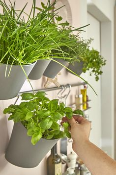 Dans la cuisine, on fait preuve d'astuce en suspendant les pots d'herbe aromatique : un mini mur végétal aussi agréable que savoureux !