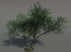 ArtStation - Crysis 1 PC - Vegetation, Tom Deerberg