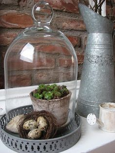 Cloche, nest of eggs, stone and pot of succulents.  Lovely vignette!