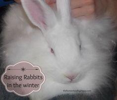 raising rabbits in the winter