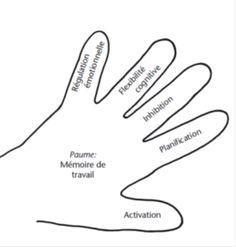 img16 modele de la main exécutive
