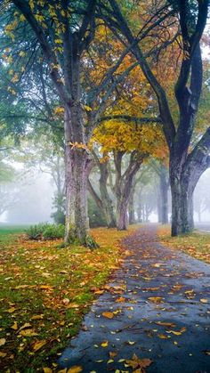Path in the fall between the trees and fog (Victoria, Vancouver Island, BC) by Andrea Kuipers cr.c.