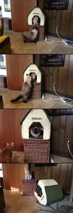 Cats' friendship ;-)