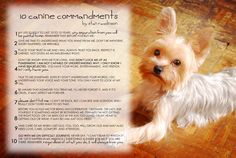 10 Canine Commandments by Stan Rawlinson. A dog's love is one of the best examples of unconditional love.