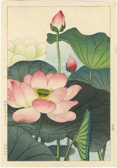 Nishimura Hodo Japanese Woodblock Print Lotus Blossoms Original 1938 Printing   eBay