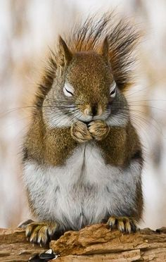 Magical best pictures of funny Eichkater- . - Magical best pictures of funny squirrel # best - Nature Animals, Woodland Animals, Animals And Pets, Baby Animals, Funny Animals, Cute Animals, Funny Squirrel Pictures, Cute Squirrel, Squirrels