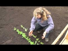 Grow your own speedy salad #howto #video