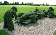 How to prune your hedge!