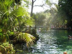 46 Best Wekiwa Springs Images Orlando Orlando Florida