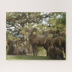 Ram Big Horn Sheep Jigsaw Puzzle #parenting #running #swimming goat craft, goat logo, goat head, back to school, aesthetic wallpaper, y2k fashion