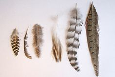 watercolor feathers, browns