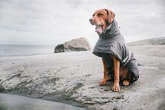 Tekninen ja miellyttävän tuntuinen Hurtta Extreme Warmer -takki suojaa koiraa erityisen hyvin kylmältä, mutta myös kosteudelta. / Warm and comfortable Hurtta Extreme Warmer jacket protects the dog effectively from cold and rain.