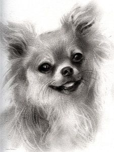 Effective Potty Training Chihuahua Consistency Is Key Ideas. Brilliant Potty Training Chihuahua Consistency Is Key Ideas. Chihuahua Art, Black Chihuahua, Dog Tattoos, Dog Portraits, Little Dogs, Animal Drawings, Dog Drawings, Dog Art, Dog Life