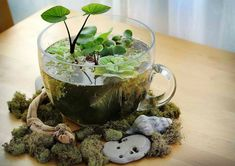 Want the best terrarium plants for your homestead? If you're looking to brighten up your home with a little greenery, then these 17 terrarium plants will give you a foundation of ideas to work from… Indoor Water Garden, Garden Plants, Indoor Plants, Water Gardens, Fairy Gardens, Indoor Pond, Miniature Gardens, Herb Garden, Garden Pond